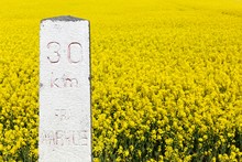 Milestone 30 Kilometers From Aarhus With Rapeseed Field In Background, Denmark