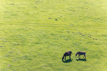 Couple Of Donkeys Grazing In The Meadow. Space For Copy.