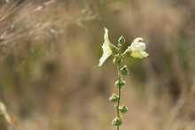 Einsame Blüte In Trockener Gräserlandschaft