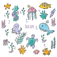 Colorful Set Of Various Sea Creatures And Sea Plants