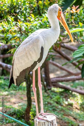 Foto auf AluDibond Pfau Bird park Taman Burung in Kuala Lumpur