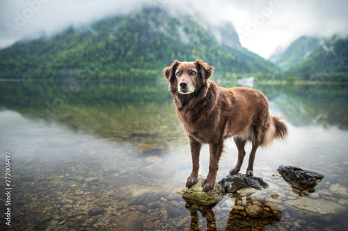 Foto auf Leinwand Khaki Dog in beautiful landscape. Dog at the lake between mountains. Travel with mans best friend.