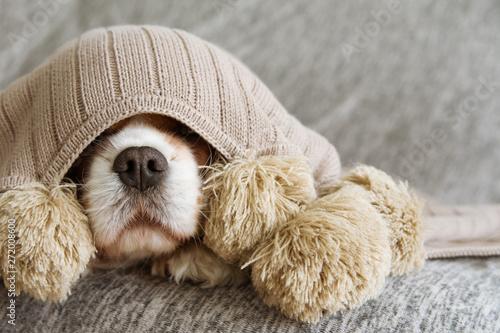 Slika na platnu SICK, PLAYFUL  OR SCARED CAVALIER DOG COVERED WITH A WARM  TASSEL BLANKET