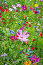 Colourful Flowers Growing In A Summer Garden