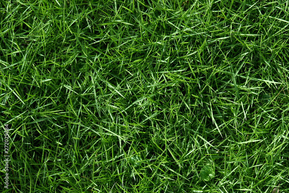 Fototapety, obrazy: Texture of green grass background