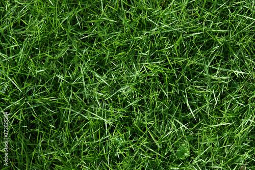 Foto op Canvas Gras Texture of green grass background
