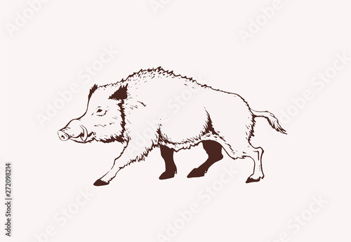 Tableau sur Toile Vintage  wild boar standing,graphical illustration,sepia
