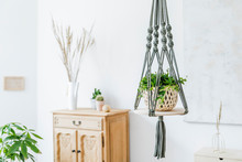 Stylish Handmade Macrame Shelf Planter Hanger For Indoor Plants, Wooden Furniture, Vase With Flowers And Elegant Accessories. Cozy Home Decor. Nice And Minimalistic Boho Interior Of Living Room.