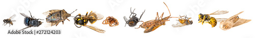Many different dead insects are in one pile. Isolated on white