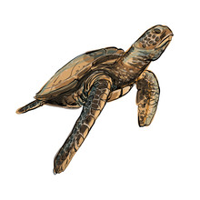 Sea Turtle Sketch Hand Drawn D...