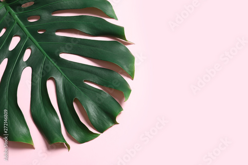 Green fresh monstera leaf on color background, top view with space for text. Tropical plant