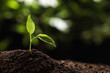 Young plant in fertile soil on blurred background, space for text. Gardening time