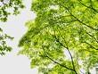 Leinwandbild Motiv tree with green leaves