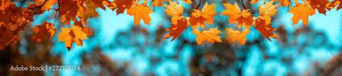 Fototapeta Banner autumn background obraz