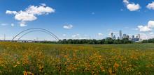 Dallas Skyline And Wild Flowers Blue Sky Dallas, Texas