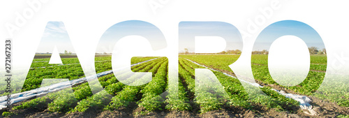 The inscription Agro on the background of a potato plantation field Wallpaper Mural