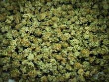 Cannabis Nahaufnahme, Getrockn...