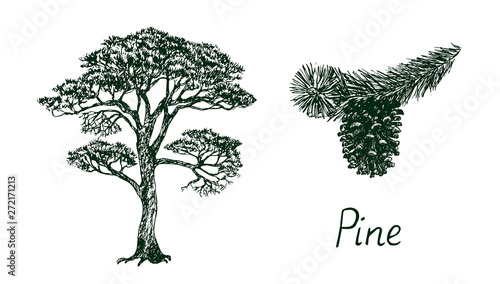 Cuadros en Lienzo Pine tree silhouette and branch with cone, hand drawn doodle, sketch, black and