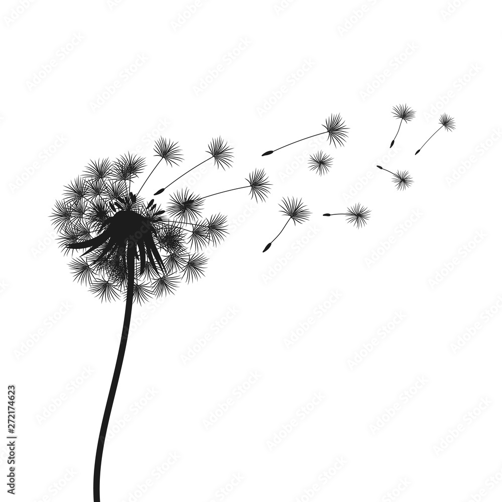 Fototapety, obrazy: Abstract black dandelion, flying seeds of dandelion - vector for stock