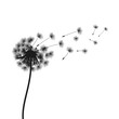 Abstract black dandelion, flying seeds of dandelion - vector for stock