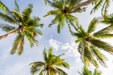 FototapetaCoconut palm tree park with sunset sky cloud in island