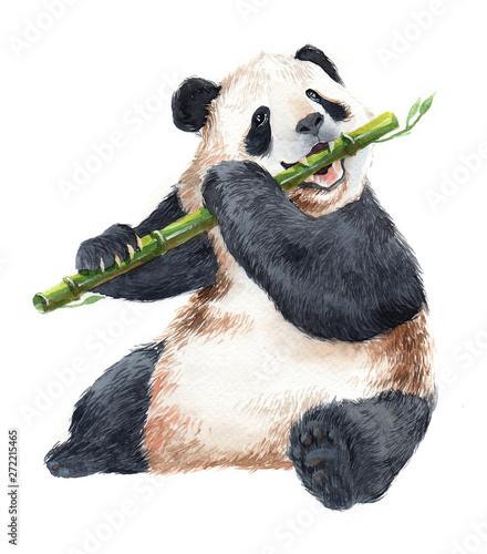Photo  Watercolor panda bear animal illustration isolated on white background