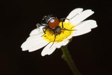 Bug On Flower Black Background