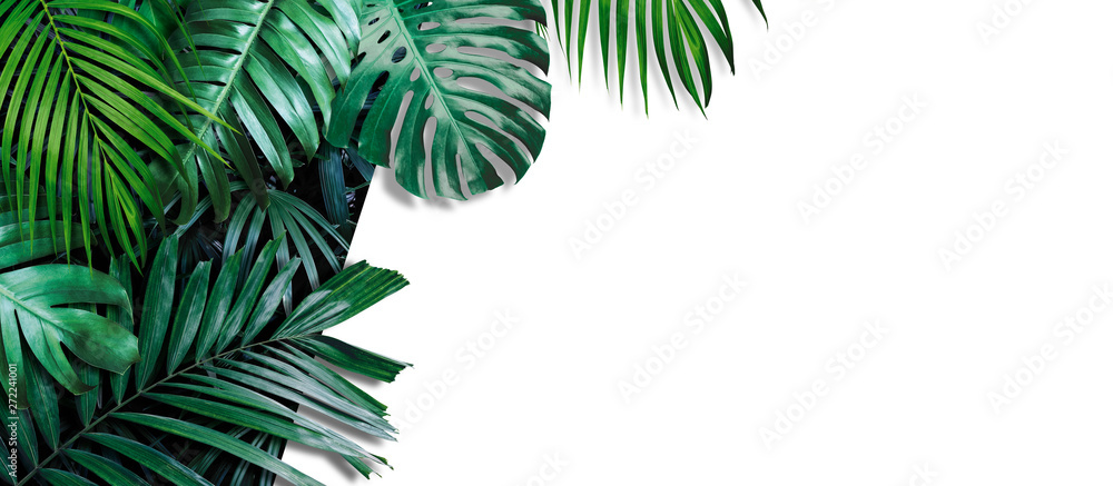 Fototapeta Tropical leaves banner on white background with copy space