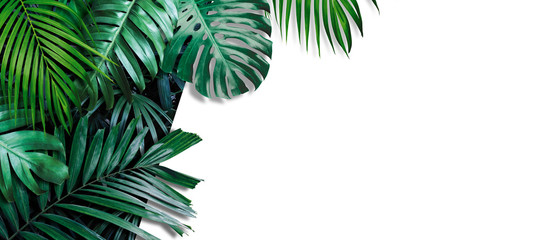Tropical leaves banner on white background with copy space