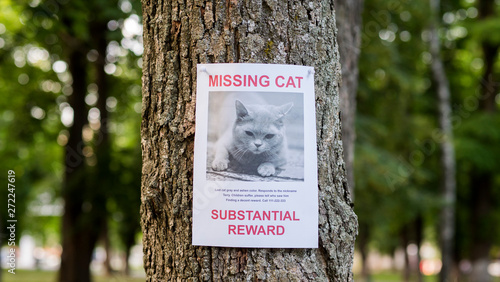 Fotografija  Banner with the announcement of the missing cat hanging on a tree in the park