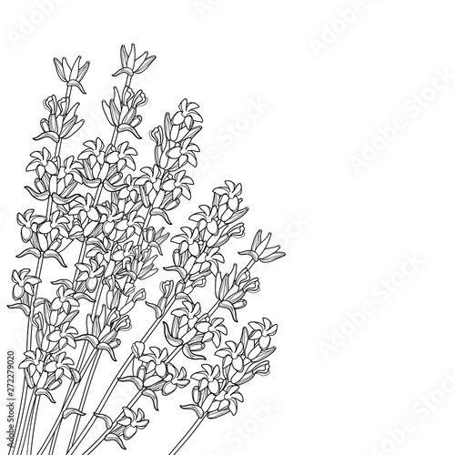 Photo  Corner bouquet with outline Lavender flower bunch, bud and leaves in black isolated on white background