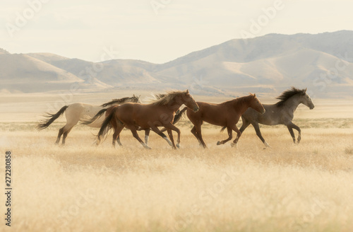 Photo  Wild Horses Running Across the Utah Desert