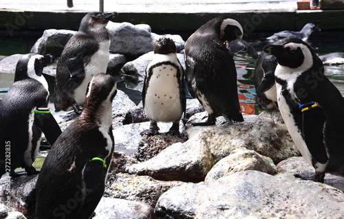 Stampa su Tela penguin on the rock in the zoo