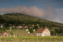 Vineyard In Hungary, In Villan...