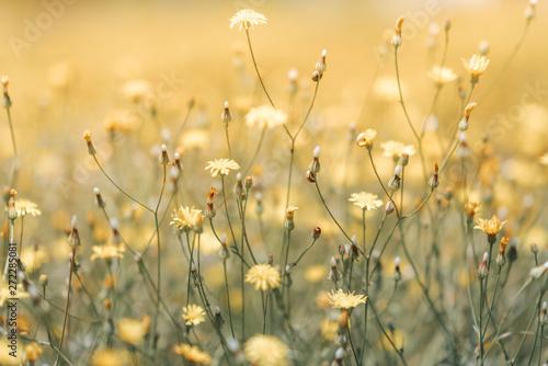 Vászonkép Daisy flower in the grass green shallow depth of field
