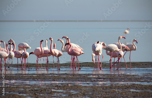 Photo  group of pink flamingos in the blue lagoon  on a sunny day