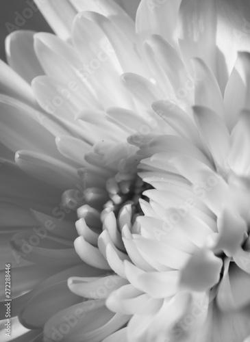 Fototapety, obrazy: closeup of white flower