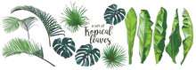Vector Tropical Palms, Plants,...