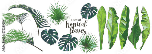 Vector Tropical palms, plants, leaf, foliage, monstera