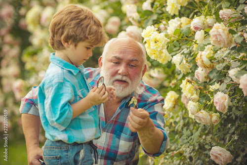 Grandfather and grandson. Old and Young. Concept of a retirement age. Little helper in garden. Senior gardener. Child are in the garden watering the rose plants.