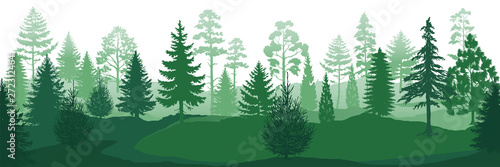 Fototapeta Forest silhouettes. Wild nature wood backgrounds, green pine trees firs and spruces landscape. Vector evergreen coniferous park backdrop obraz