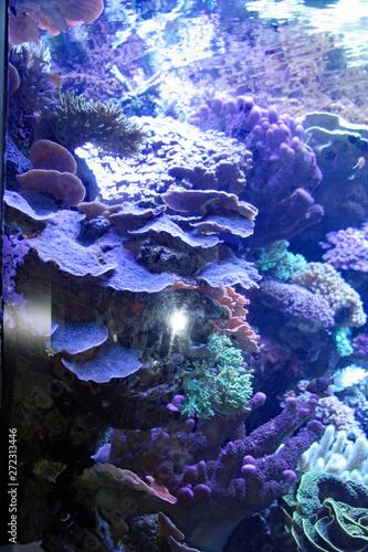Sea Reef Canvas Print
