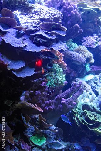 Photo  Sea Reef
