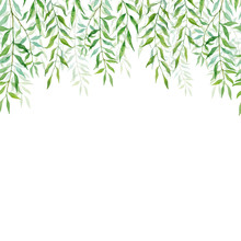 Horizontal Seamless Background With Branches And Leaves Of Willows. Hand Painted Branches And Leaves On White Background. Natural Leafy Card Design