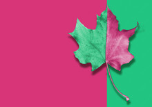 Autumn Pink And Green Leaf On Abstract Background