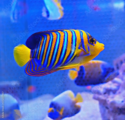 Fototapety, obrazy: fish in aquarium