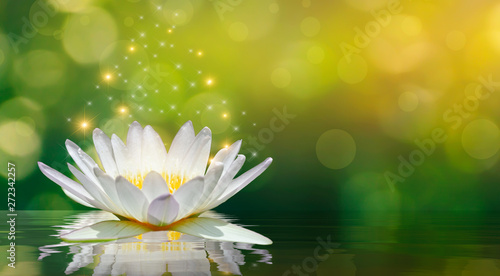 Poster Waterlelies lotus white light purple floating light sparkle background