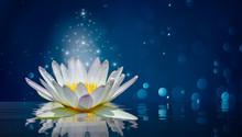 Lotus White Light Purple Float...