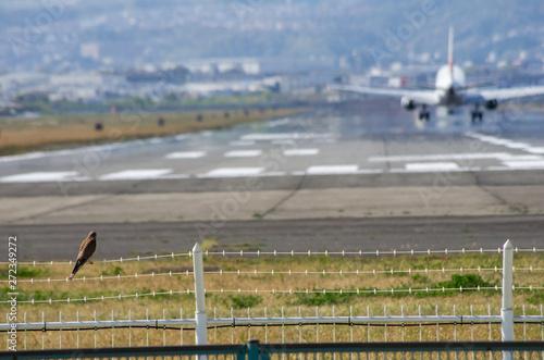 Poster Airport 有刺鉄線にとまるチョウゲンボウのいる滑走路の見える風景