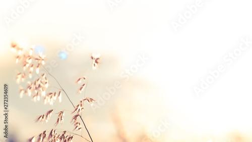 Obraz na plátně  Wild flowers on the field in sunset light nature background